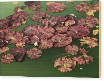 Water Lilies Wood Print by Bonnie Bruno