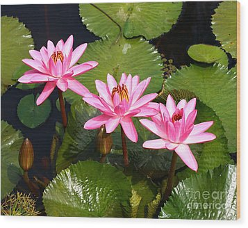 Wood Print featuring the photograph Water Lilies. by Denise Pohl