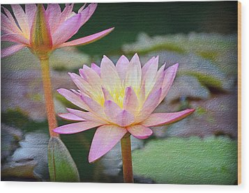 Water Lilies Wood Print by Steven Michael