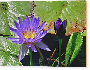 Wood Print featuring the photograph Water Lillies by Helen Haw