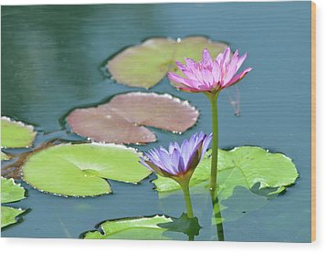 Water Lillies Of A Different Color Wood Print by Kathy Gibbons
