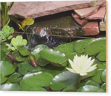 Wood Print featuring the photograph Water Lillies by Richard Willows