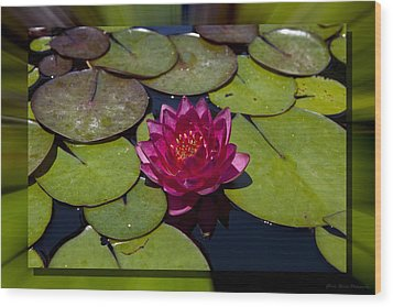 Water Lilly 4 Wood Print by Charles Warren