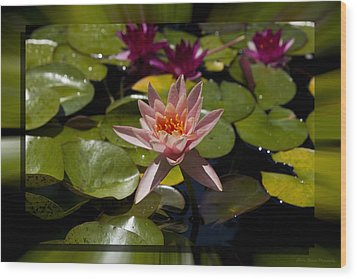 Water Lilly 6 Wood Print by Charles Warren