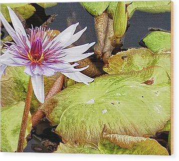 Water Lilly Close Up Wood Print by Forest Alan Lee