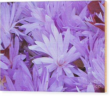 Wood Print featuring the photograph Water Lilly Crocus by Michele Penner