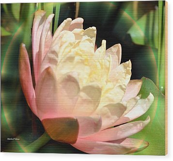 Water Lilly In Bloom Wood Print by Maria Urso