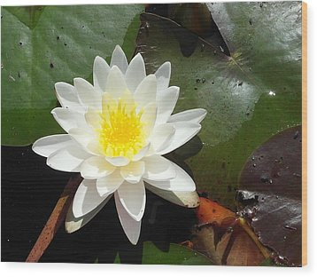 Water Lily 1 Wood Print by Tanya Moody