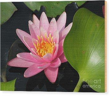Water Lily 2 Wood Print by Eva Kaufman