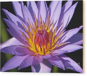Water Lily 6 Wood Print by Eva Kaufman