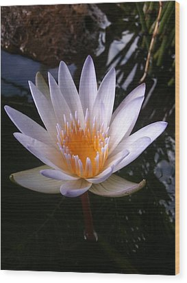 Wood Print featuring the photograph Water Lily by Carol Sweetwood