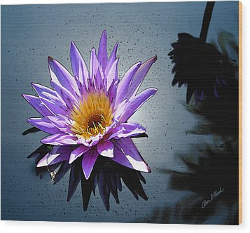 Water Lily Dream At Fairchild 2 Wood Print by Olivia Novak