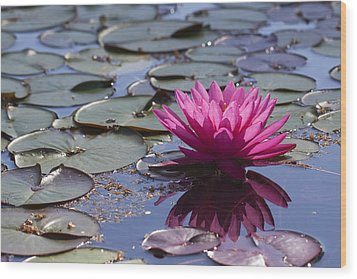 Water Lily Wood Print