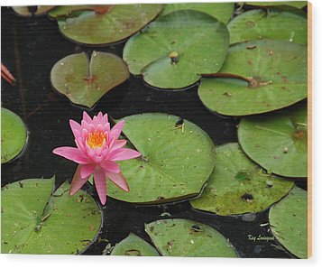 Water Lily Wood Print by Kay Lovingood