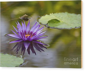 Water Lily Kissing The Water Wood Print by Sabrina L Ryan