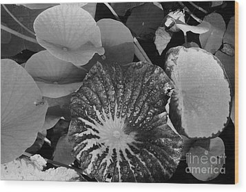 Wood Print featuring the photograph Water Lily Leaf by Jasna Gopic