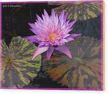 Water Lily Magic Wood Print by M C Sturman