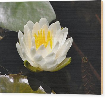 Wood Print featuring the photograph Water Lily by Mary McAvoy