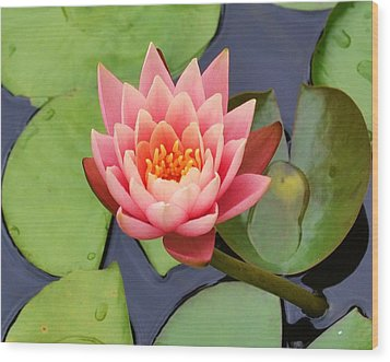 Water Lily Wood Print by Mary Zeman