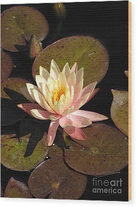 Water Lily Wood Print by Michelle H