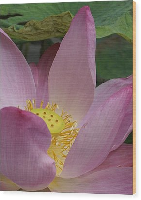 Water Lily Shower Head Wood Print by Gregory Smith