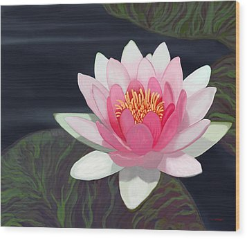 Water Lily Wood Print by Tim Stringer