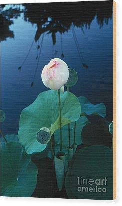 Water Lily Wood Print by Vilas Malankar