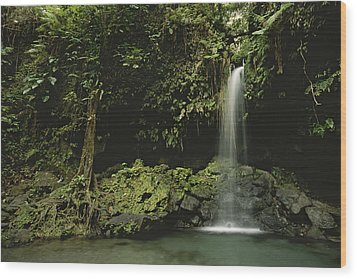 Waterfall And Emerald Pool In A Lush Wood Print by Tim Laman