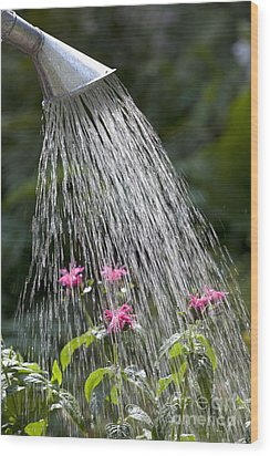 Watering Can Wood Print by Picture Partners and Photo Researchers