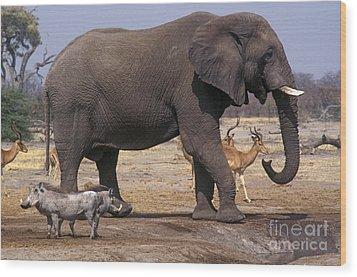 Wood Print featuring the photograph Watering Hole - Savuti Marsh Botswana by Craig Lovell