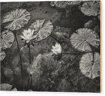 Waterlilies In Sepia Wood Print by Marion McCristall