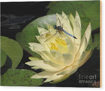 Waterlily With Dragonfly Wood Print by Eva Kaufman