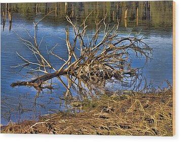 Waterlogged Tree Wood Print by Douglas Barnard