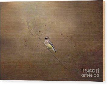 Waxwing Spring Visit Wood Print by Cris Hayes