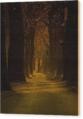 Way In The Forest Wood Print by Zafer GUDER