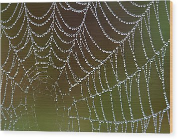 Wood Print featuring the photograph Web With Dew by Daniel Reed