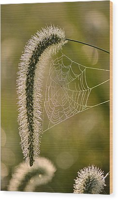 Wood Print featuring the photograph Webbed Tail by JD Grimes