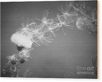 Wood Print featuring the photograph Weed In The Wind by Deniece Platt