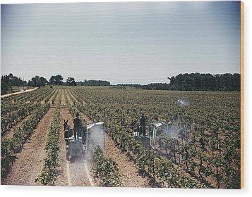 Welchs Grape Vineyard Covers 250 Acres Wood Print by Willard Culver