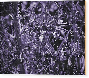 Welcome To The Purple Jungle Wood Print by Beth Akerman
