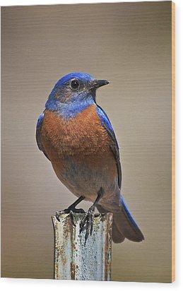 Wood Print featuring the photograph Western Bluebird by Britt Runyon