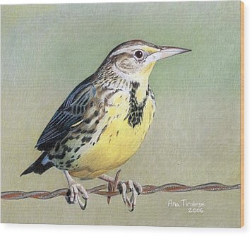 Wood Print featuring the drawing Western Meadowlark by Ana Tirolese