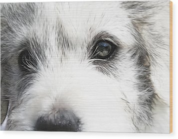 Westie Wood Print by Tilly Williams