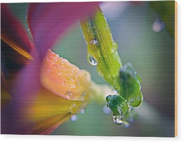 Wood Print featuring the photograph Wet Lily by Susan Leggett