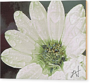 Wet Petals Wood Print by Artist and Photographer Laura Wrede