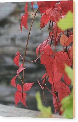 Wet Reds Wood Print