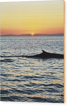 Whale At Sunset Wood Print by Timothy OLeary