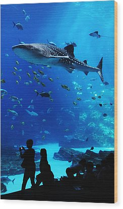 Whale Shark Fly-by Wood Print by Brian M Lumley