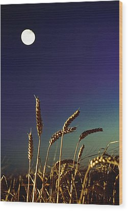 Wheat Field At Night Under The Moon Wood Print by The Irish Image Collection