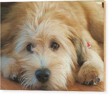 Wheaten Terrier 1 Wood Print by Vijay Sharon Govender